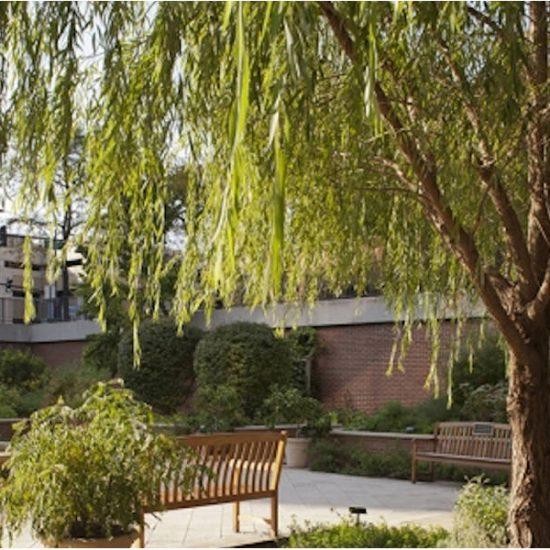 Atkins Medicinal Garden